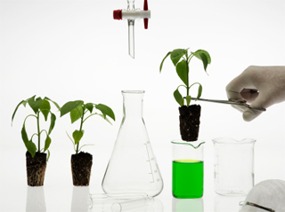 Genetically Modified Food – Do They Have the Right Genes?