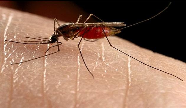 Malaria – Symptoms and Treatment