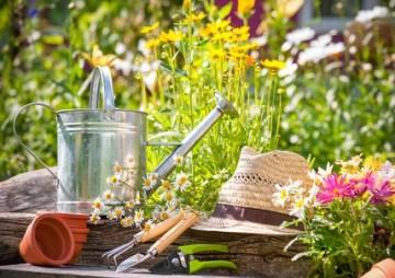 6 Useful Gardening Tips to Help your Plants Flourish Through Summer