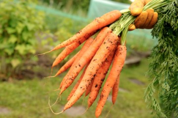 Take Care of Your Garden: Part 4, Tips to Make Your Garden Conducive For Vegetable Growth