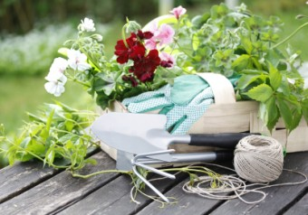Your Guide to Starting a String Garden