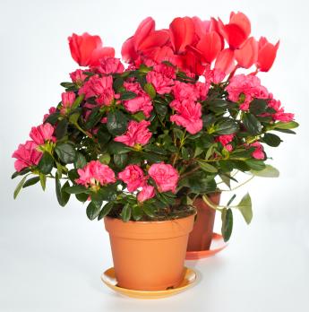 Inklings for Indoor Gardening
