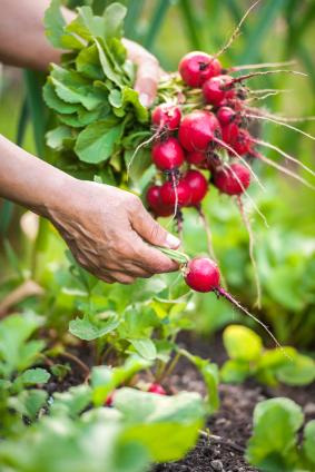 Take Care of Your Garden: Part 3, Organic Gardening