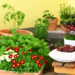 How to start a terrace garden?