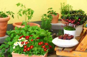 Take Care of Your Garden: Part 6, How to Maintain a Terrace Garden?