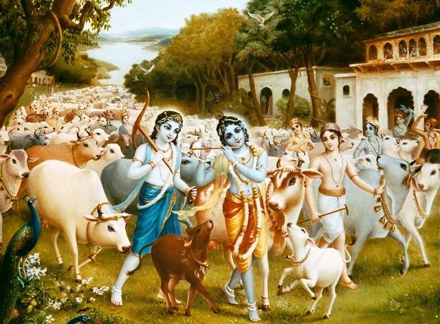 7krishna-cows